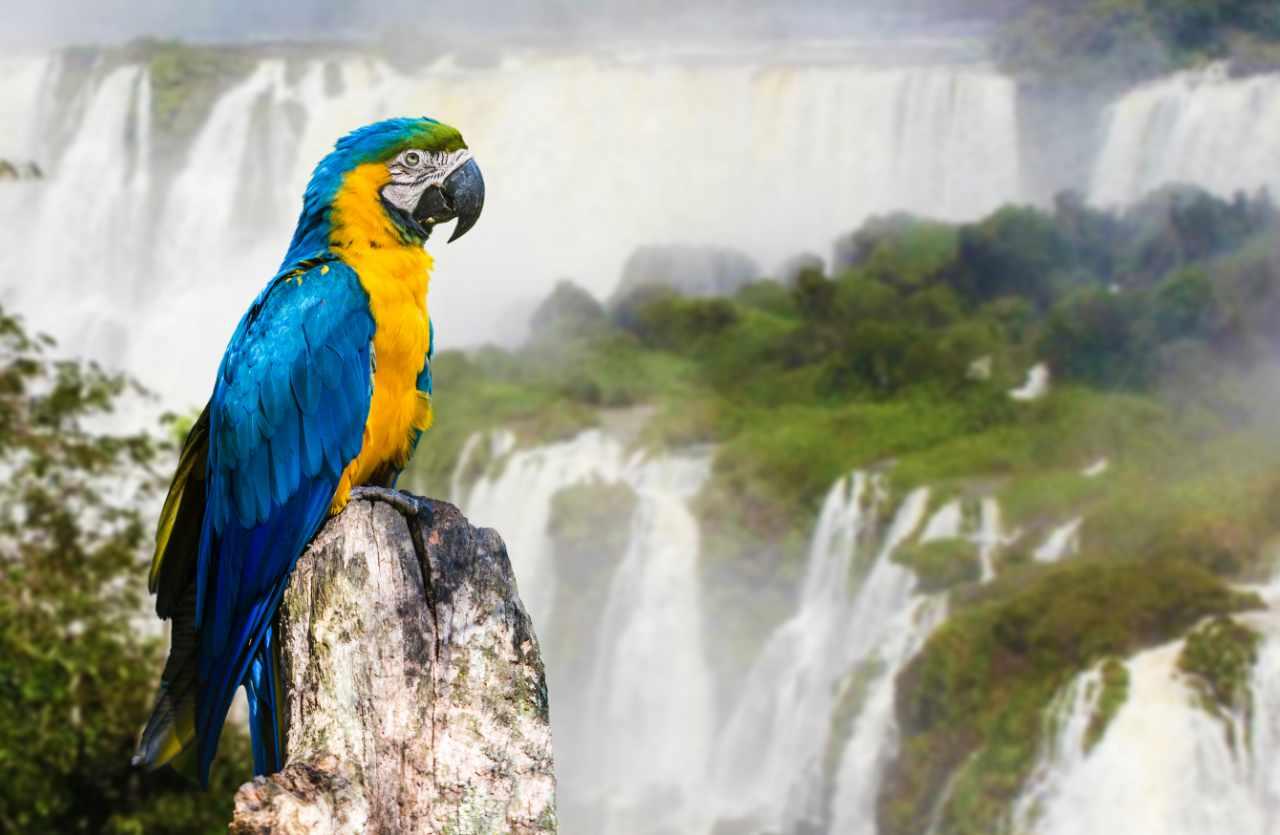 Papagei und Wasserfall