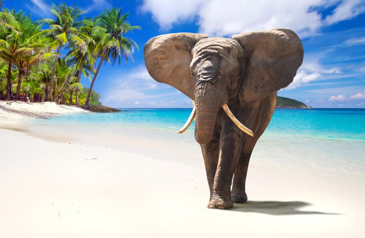Elefant am Strand